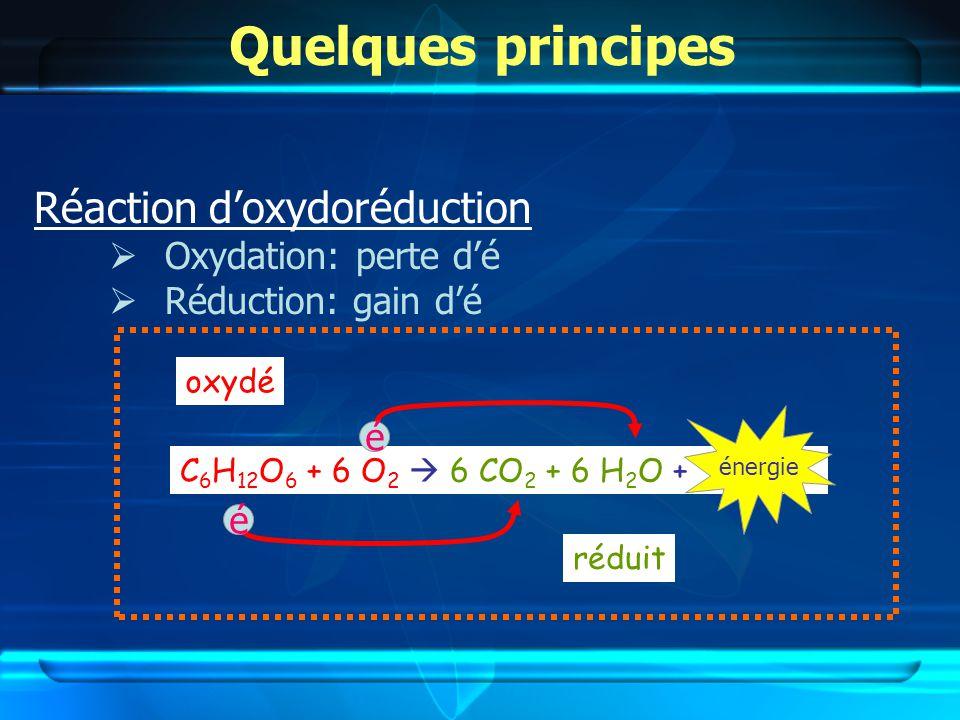 Quelques principes Réaction d'oxydoréduction Oxydation: perte d'é