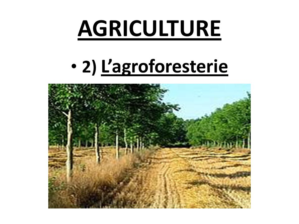 AGRICULTURE 2) L'agroforesterie