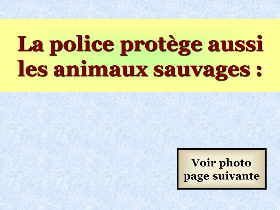 La police protège aussi les animaux sauvages :