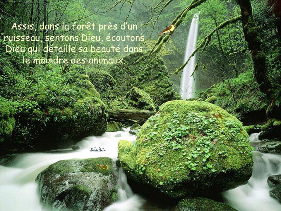Assis, dans la forêt près d'un ruisseau, sentons Dieu, écoutons Dieu qui détaille sa beauté dans le moindre des animaux.