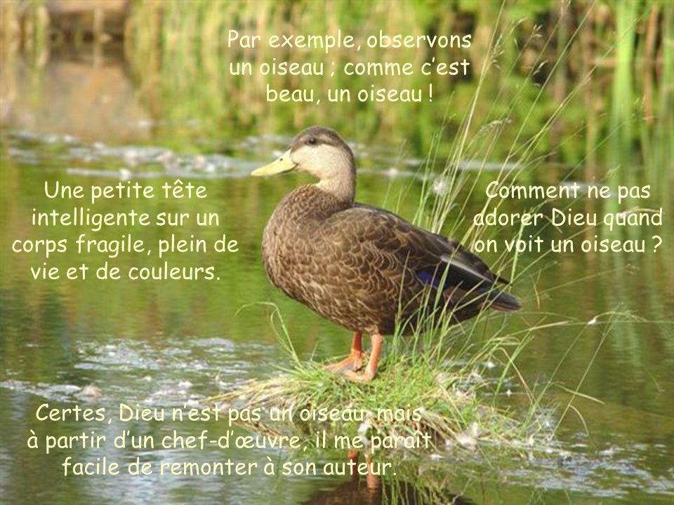 Par exemple, observons un oiseau ; comme c'est beau, un oiseau !