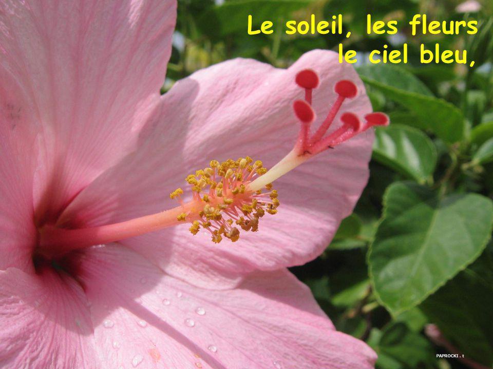 Le soleil, les fleurs le ciel bleu,