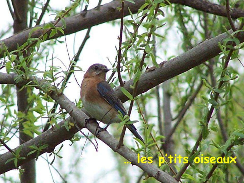 … les p'tits oiseaux