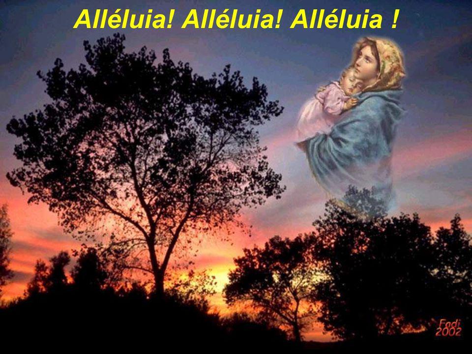 Alléluia! Alléluia! Alléluia !