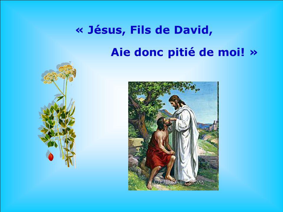 « Jésus, Fils de David, Aie donc pitié de moi! »