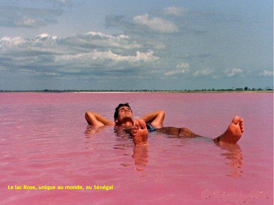 Le lac Rose, unique au monde, au Sénégal