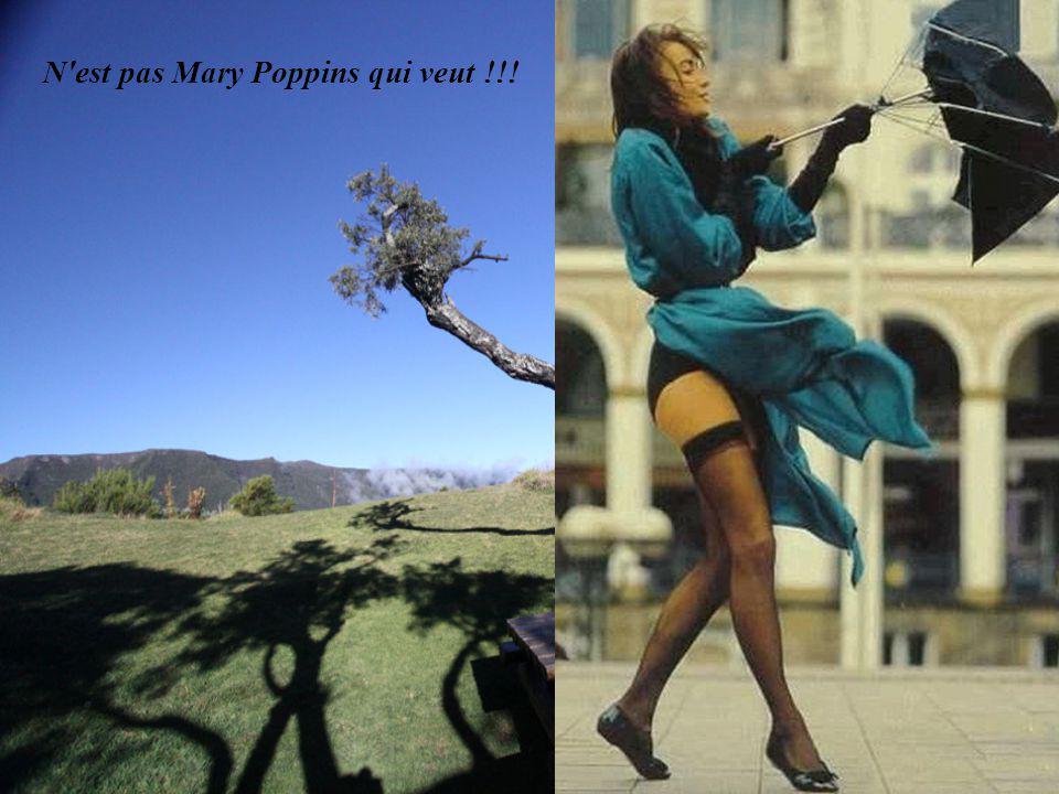N est pas Mary Poppins qui veut !!!