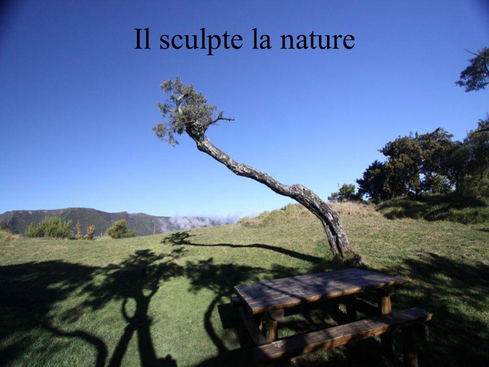 Il sculpte la nature
