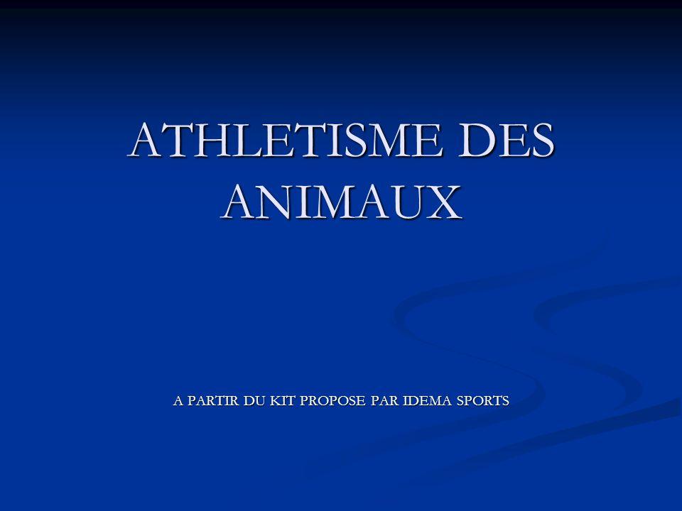 ATHLETISME DES ANIMAUX