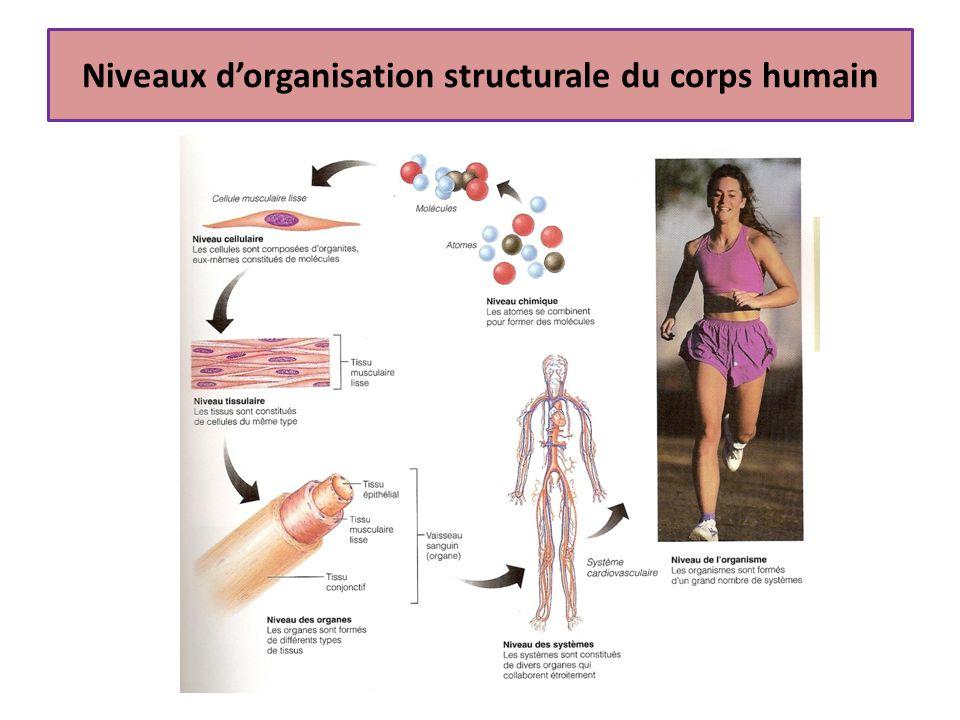 Niveaux d'organisation structurale du corps humain