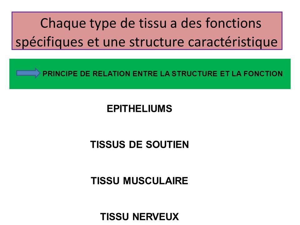 Chaque type de tissu a des fonctions spécifiques et une structure caractéristique