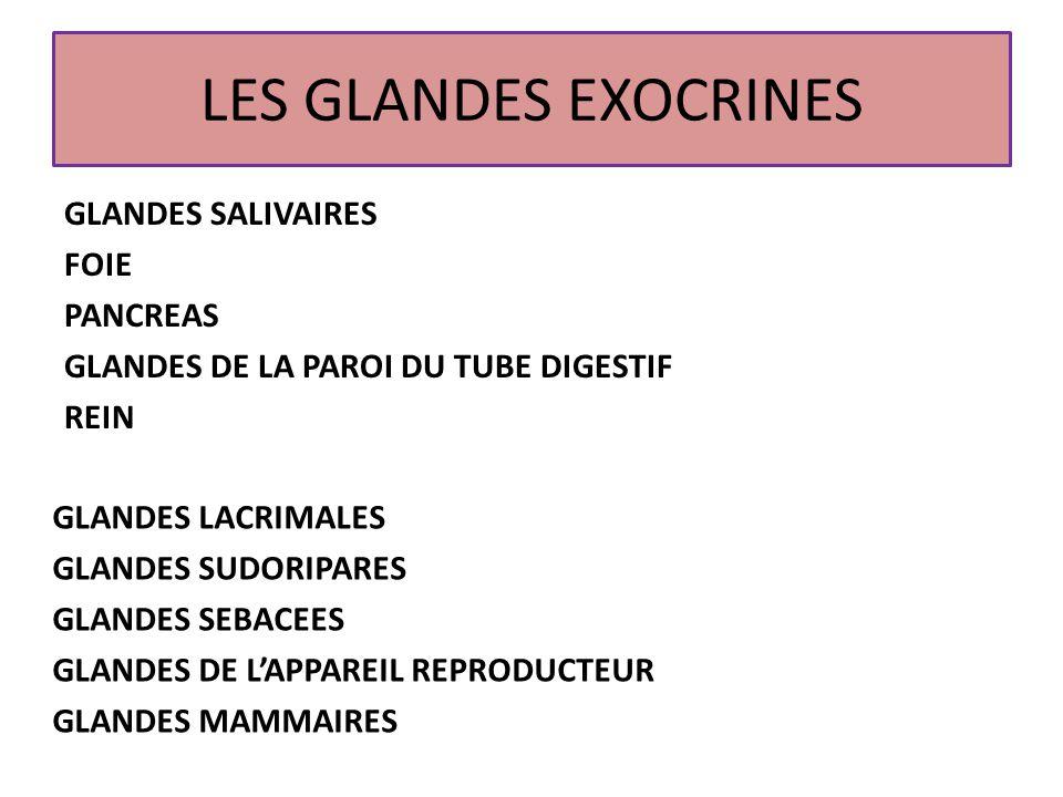 LES GLANDES EXOCRINES GLANDES SALIVAIRES FOIE PANCREAS GLANDES DE LA PAROI DU TUBE DIGESTIF REIN GLANDES LACRIMALES.