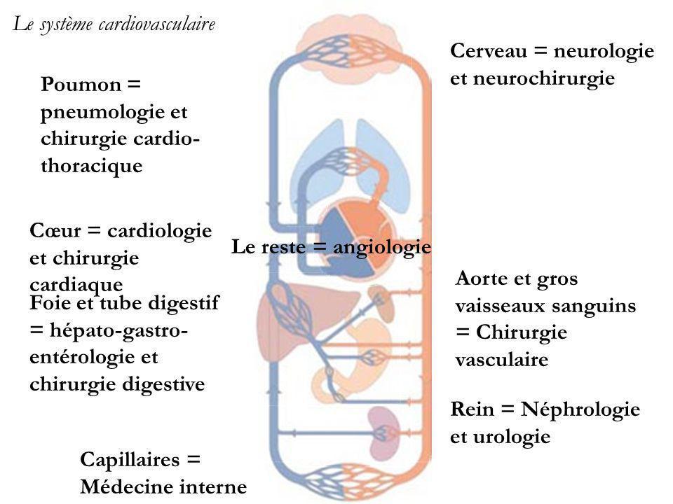 Foie et tube digestif = hépato-gastro-entérologie et chirurgie digestive
