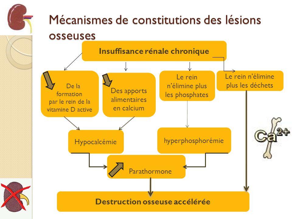 Mécanismes de constitutions des lésions osseuses