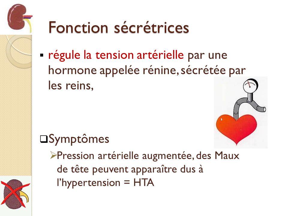 Fonction sécrétrices régule la tension artérielle par une hormone appelée rénine, sécrétée par les reins,