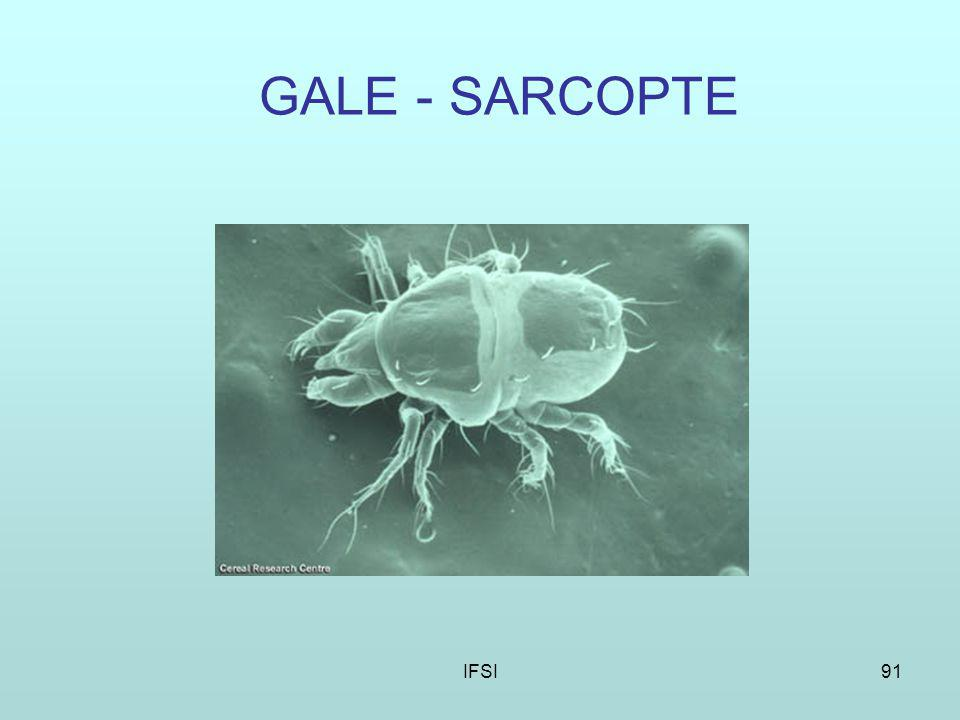GALE - SARCOPTE IFSI