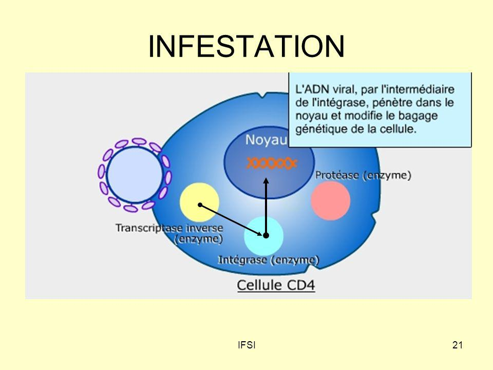 INFESTATION IFSI