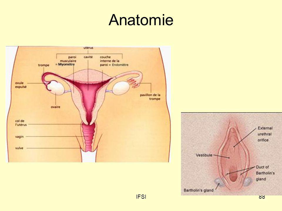 Anatomie IFSI