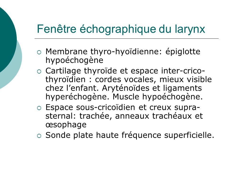 Fenêtre échographique du larynx