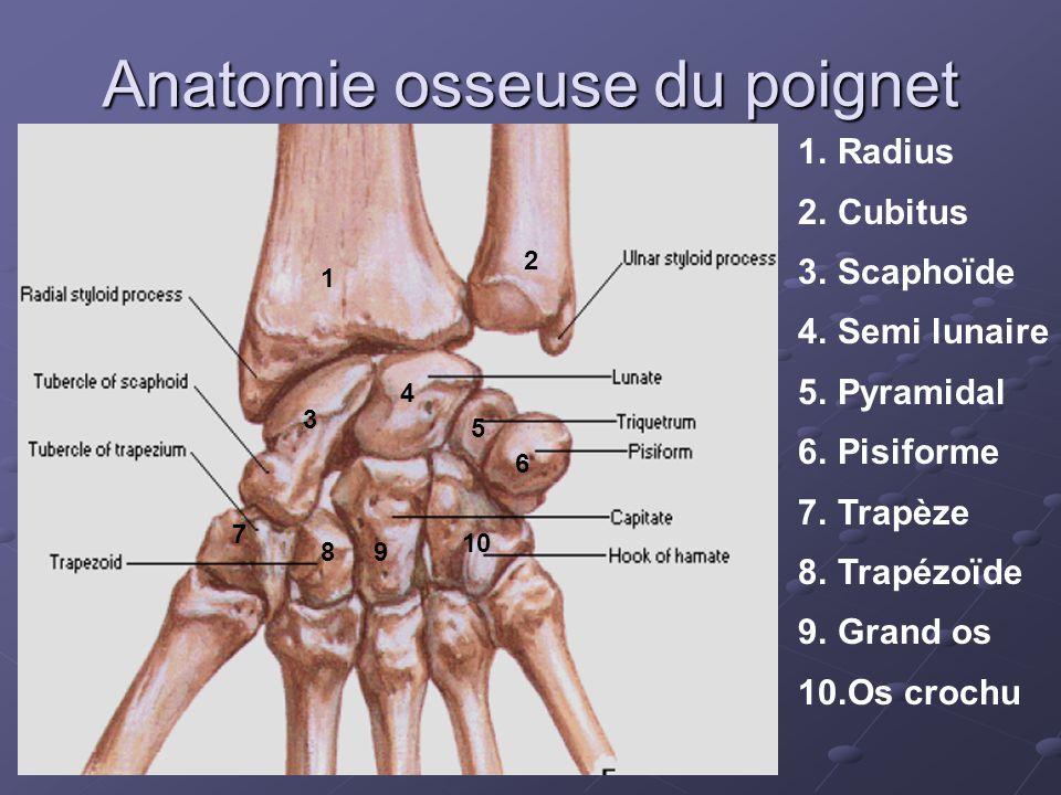 Anatomie osseuse du poignet