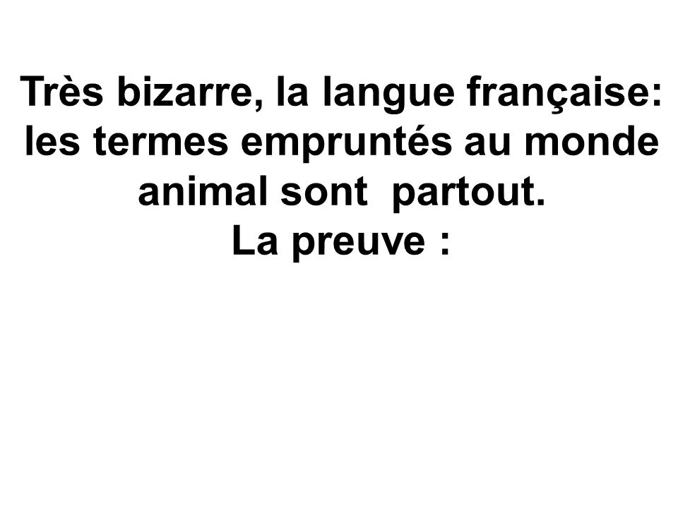 Très bizarre, la langue française: les termes empruntés au monde