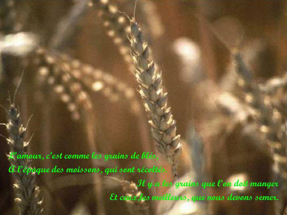L'amour, c'est comme les grains de blés,