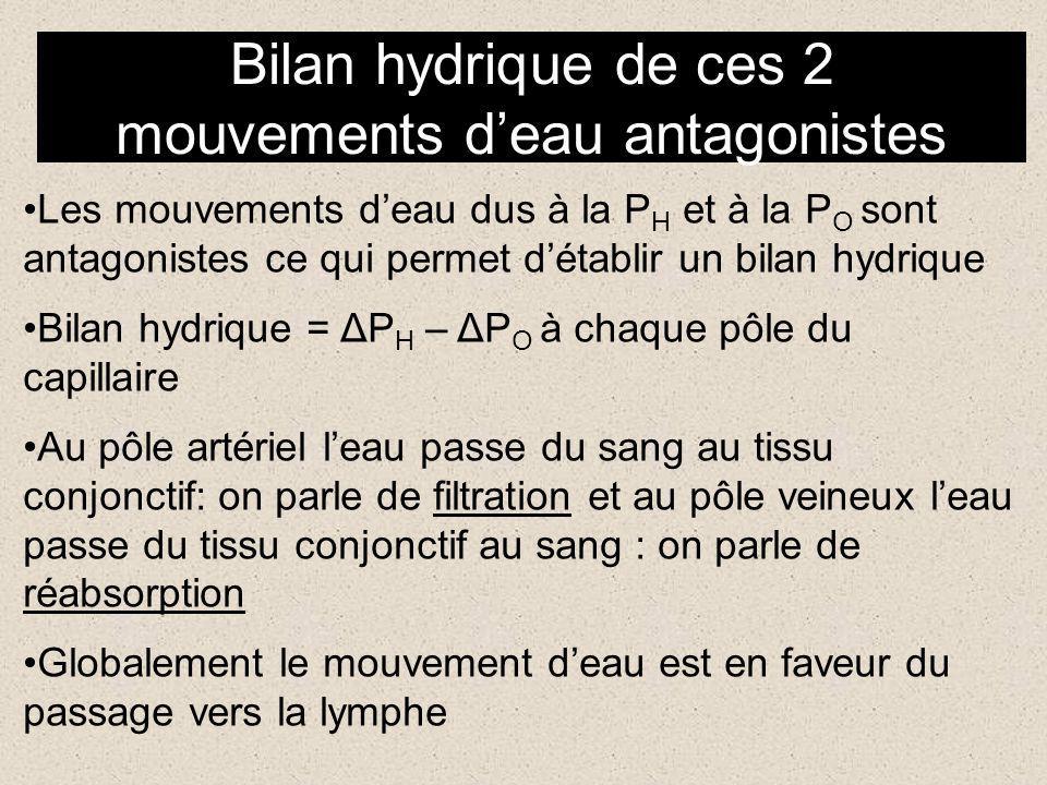 Bilan hydrique de ces 2 mouvements d'eau antagonistes