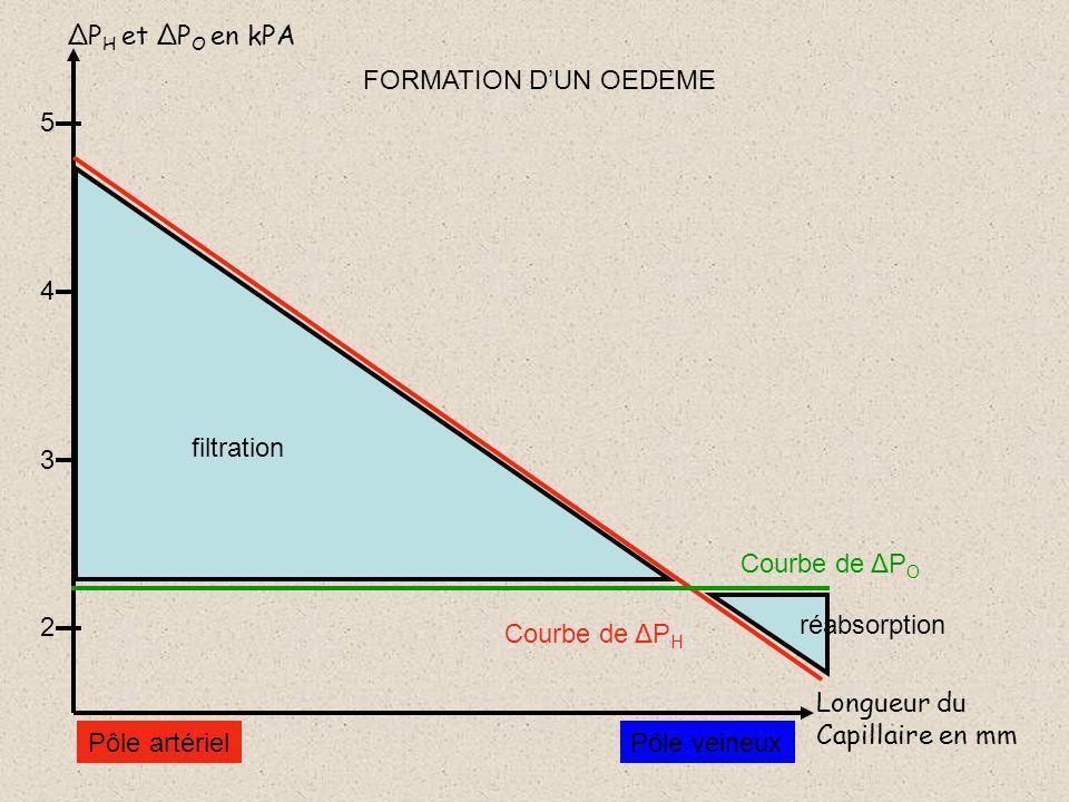 ΔPH et ΔPO en kPA FORMATION D'UN OEDEME. 5. 4. filtration. 3. Courbe de ΔPO. 2. réabsorption.