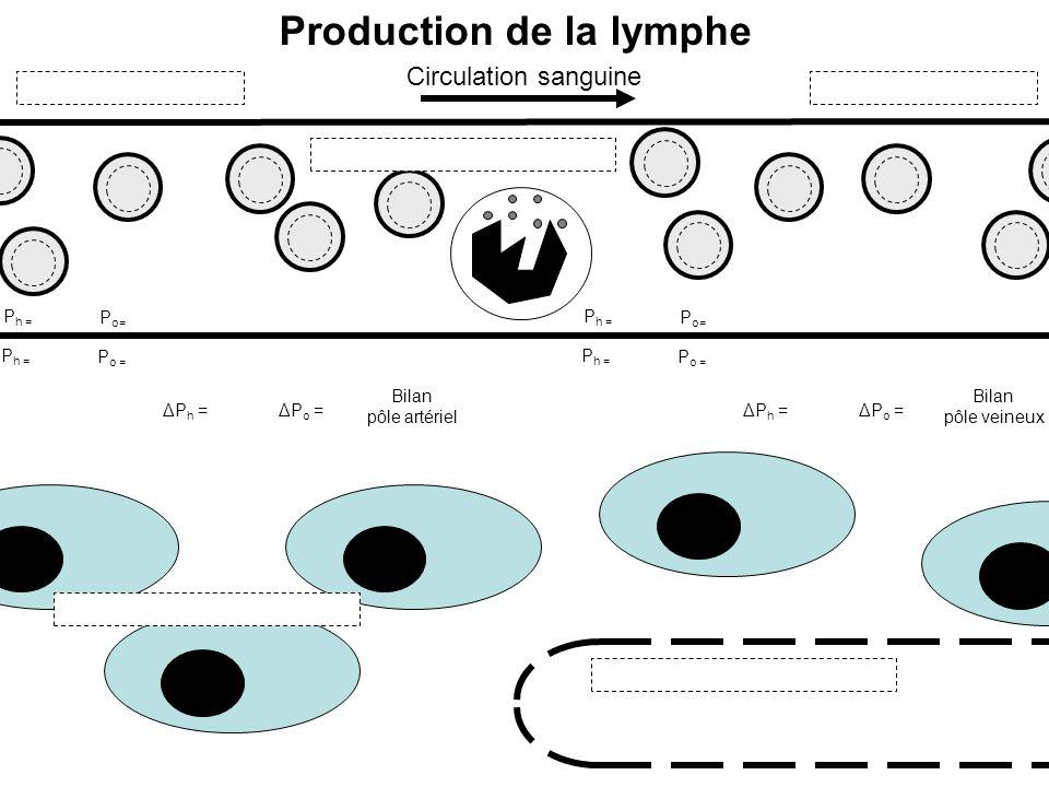 Production de la lymphe