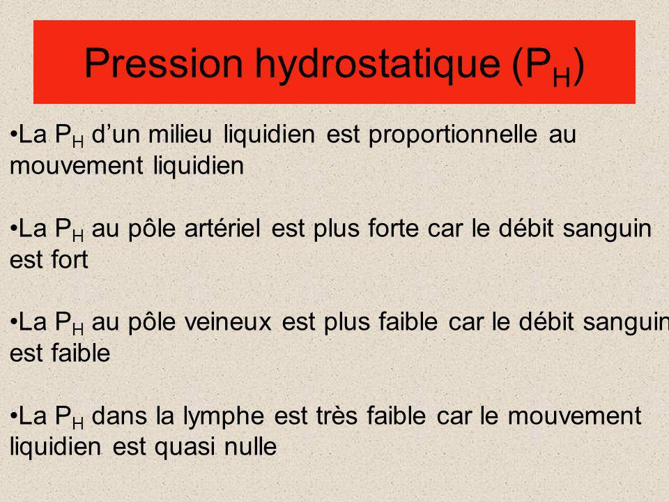 Pression hydrostatique (PH)