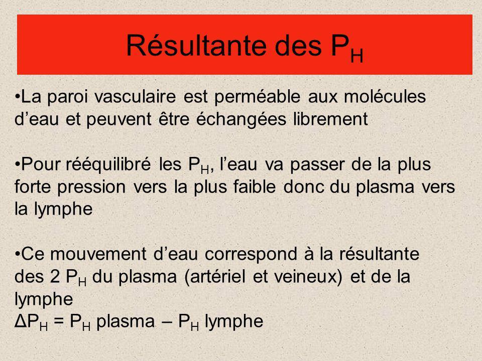 Résultante des PH La paroi vasculaire est perméable aux molécules d'eau et peuvent être échangées librement.