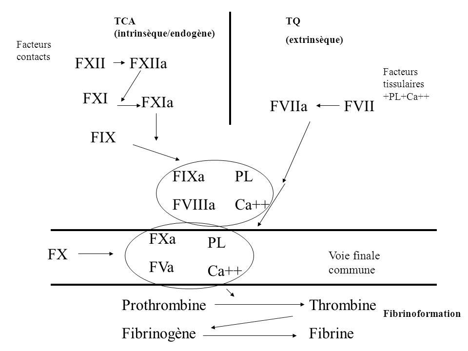 Prothrombine Thrombine Fibrinogène Fibrine