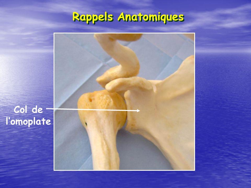 Rappels Anatomiques Col de l'omoplate