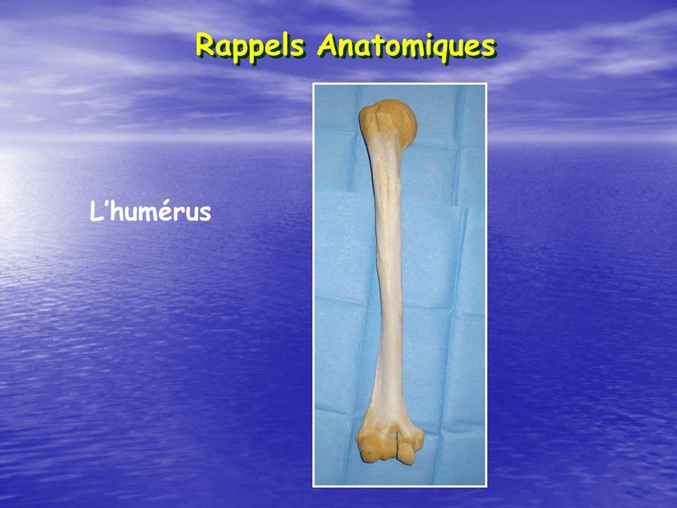 Rappels Anatomiques L'humérus