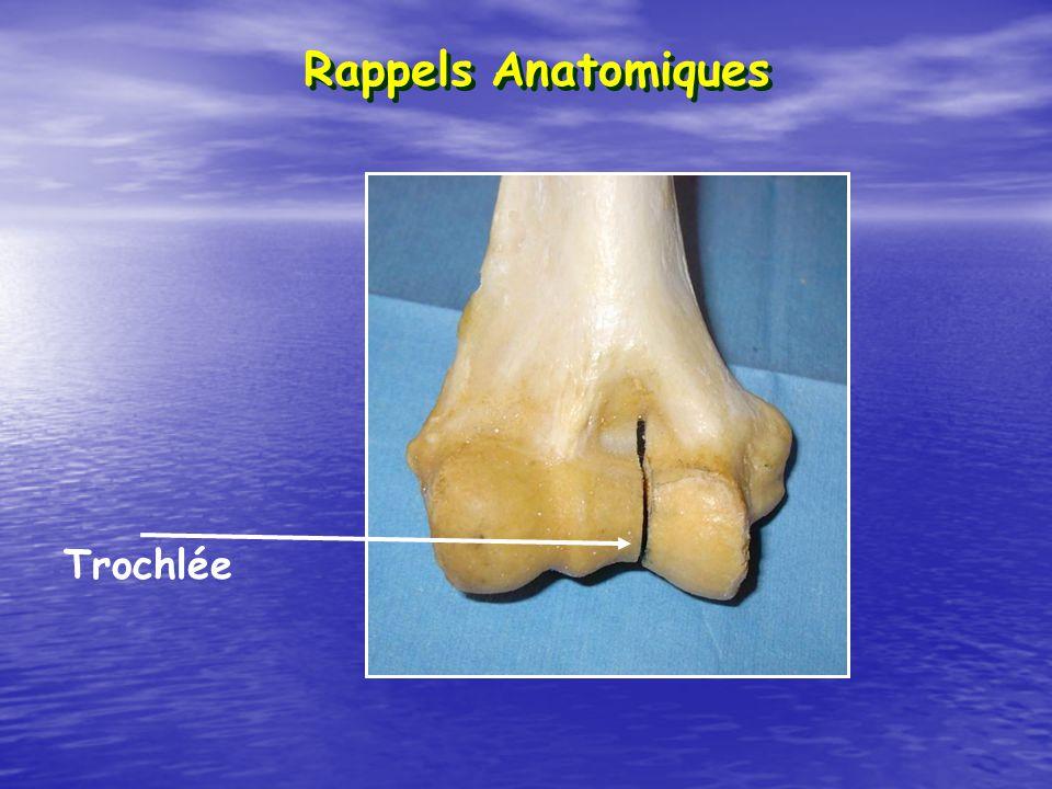 Rappels Anatomiques Trochlée