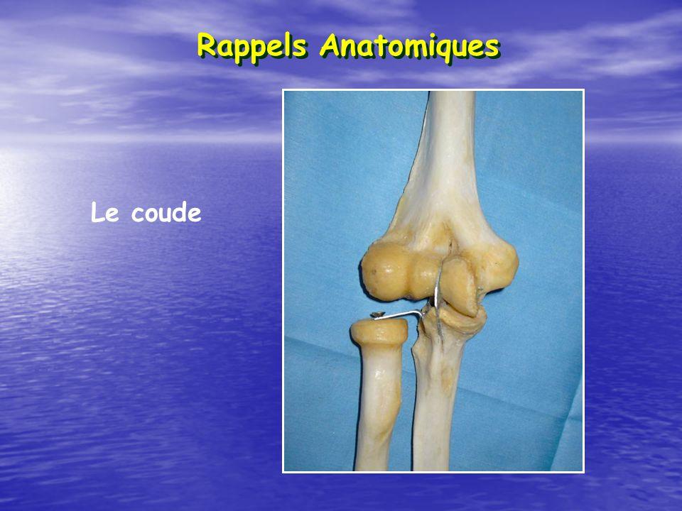 Rappels Anatomiques Le coude