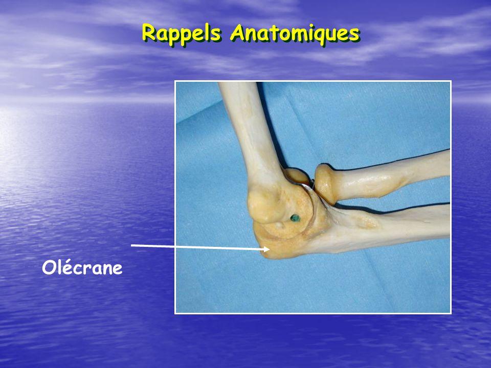 Rappels Anatomiques Olécrane