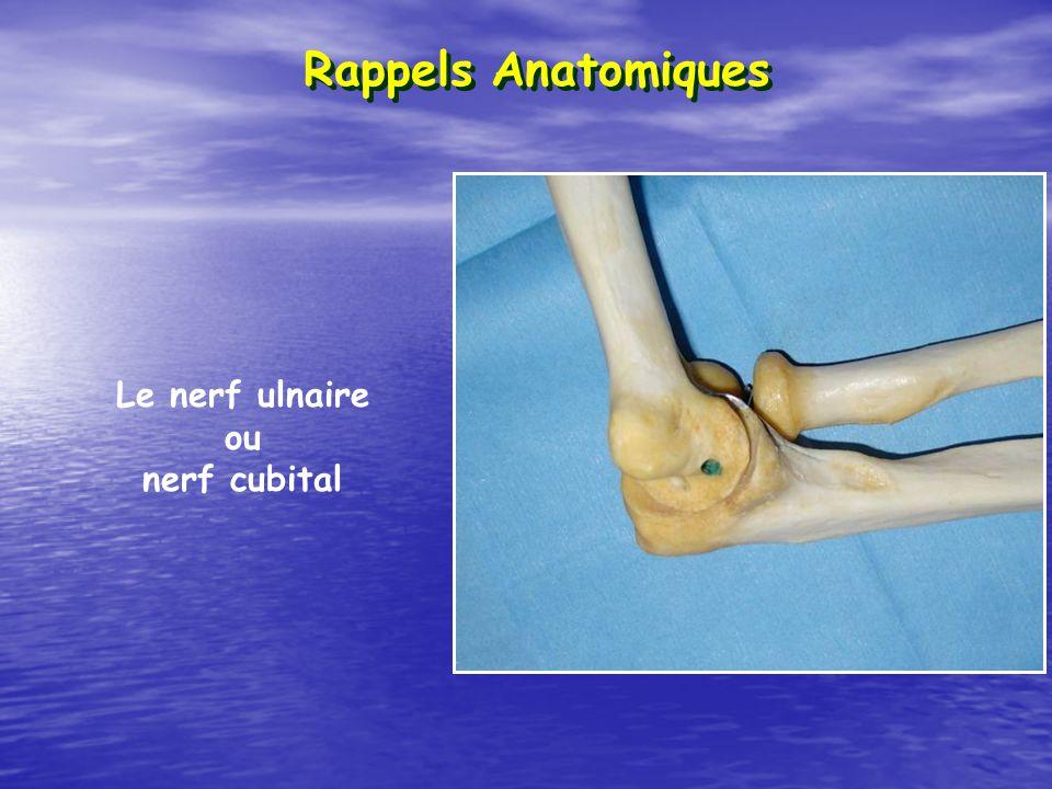 Le nerf ulnaire ou nerf cubital