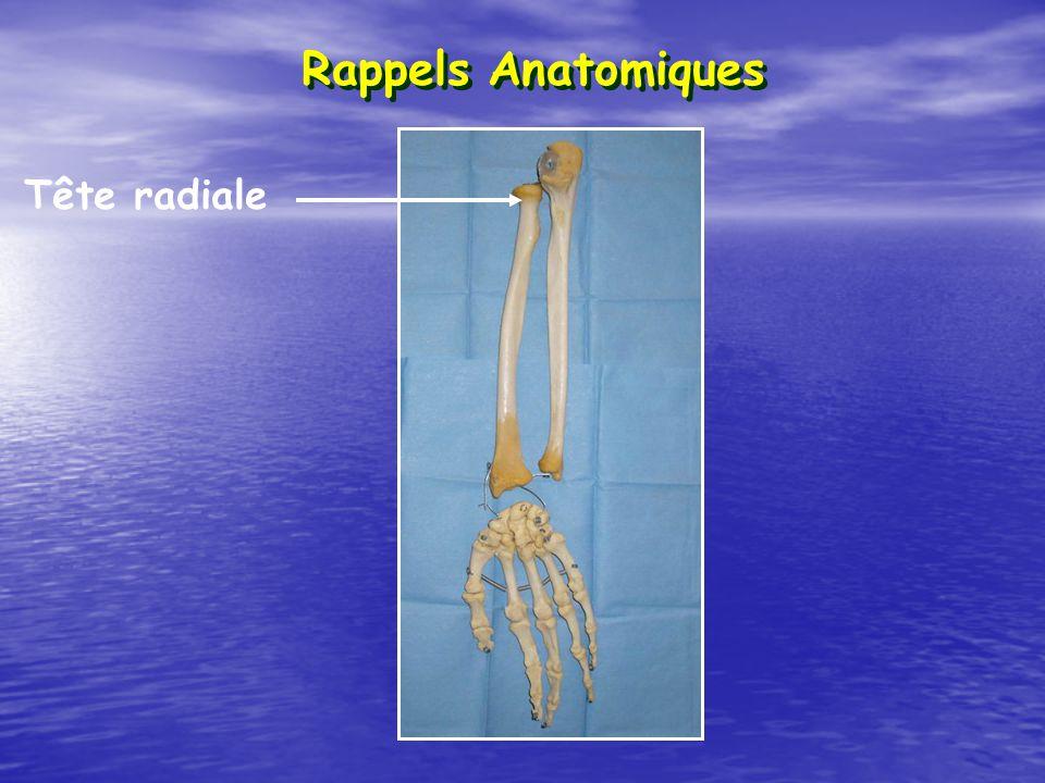 Rappels Anatomiques Tête radiale