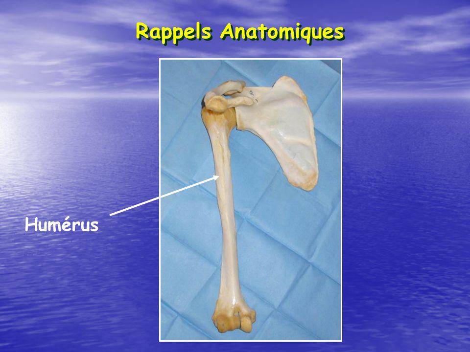 Rappels Anatomiques Humérus