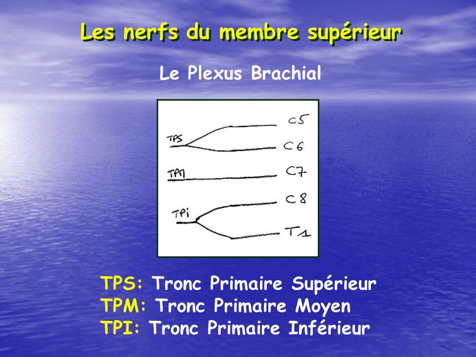 Les nerfs du membre supérieur