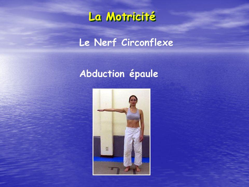La Motricité Le Nerf Circonflexe Abduction épaule