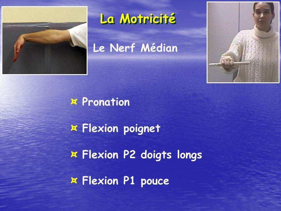 La Motricité Le Nerf Médian ¤ Pronation ¤ Flexion poignet