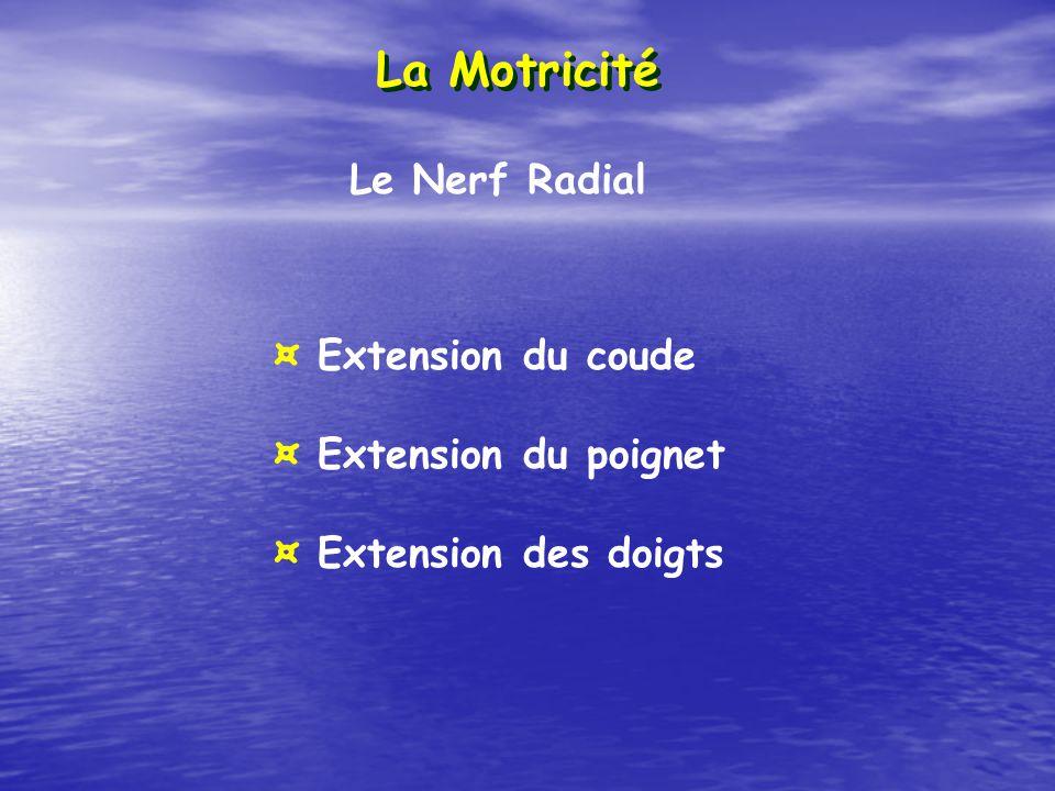 La Motricité Le Nerf Radial ¤ Extension du coude