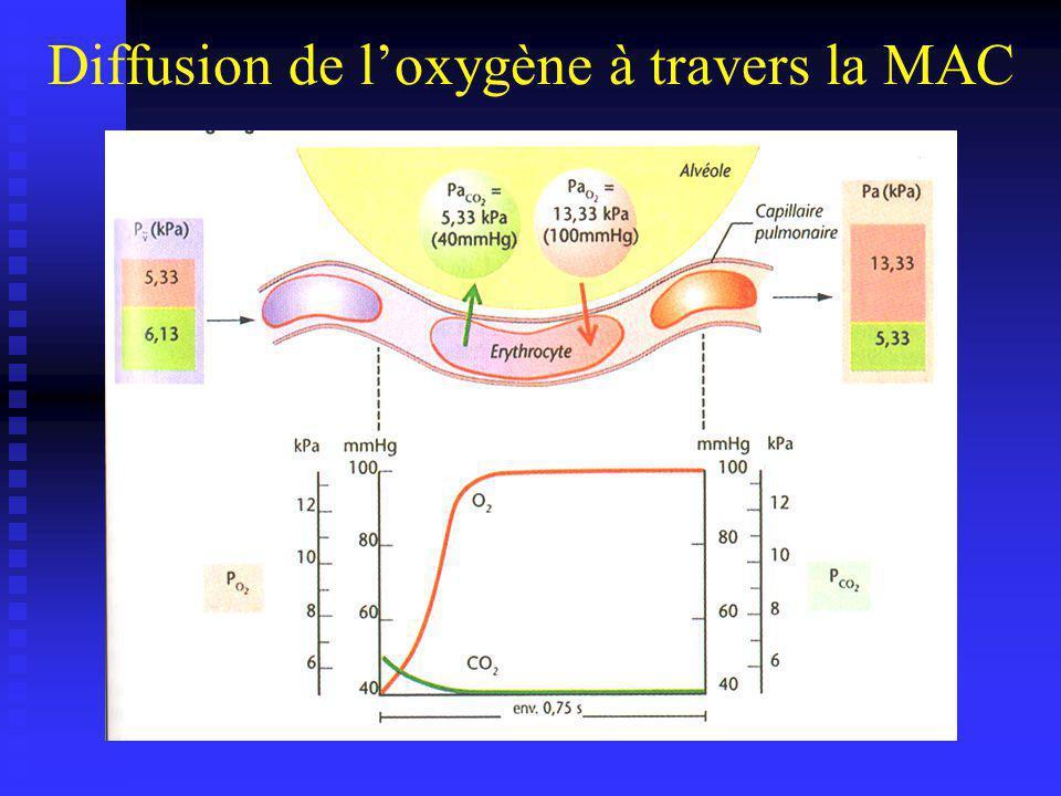 Diffusion de l'oxygène à travers la MAC
