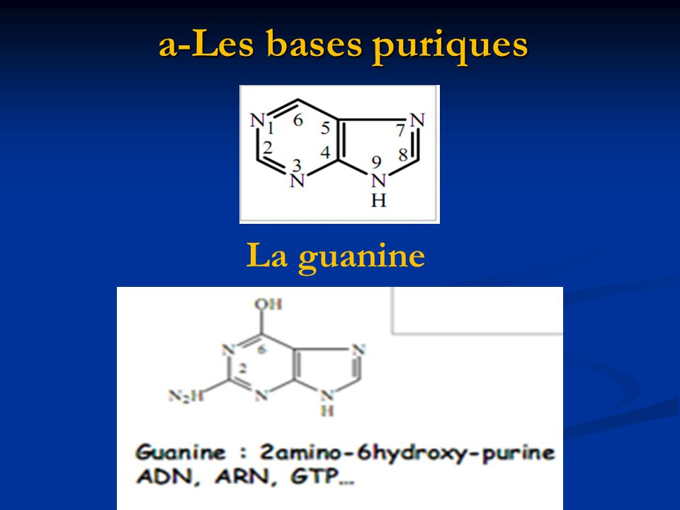 a-Les bases puriques La guanine