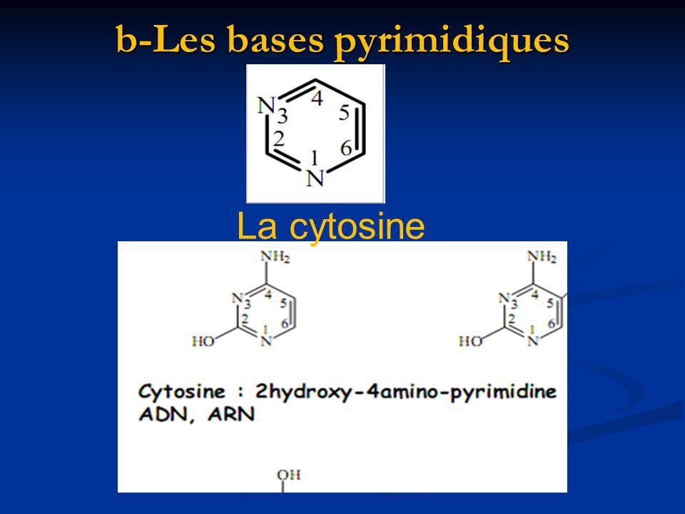b-Les bases pyrimidiques