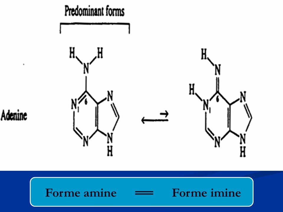 Forme amine ══ Forme imine