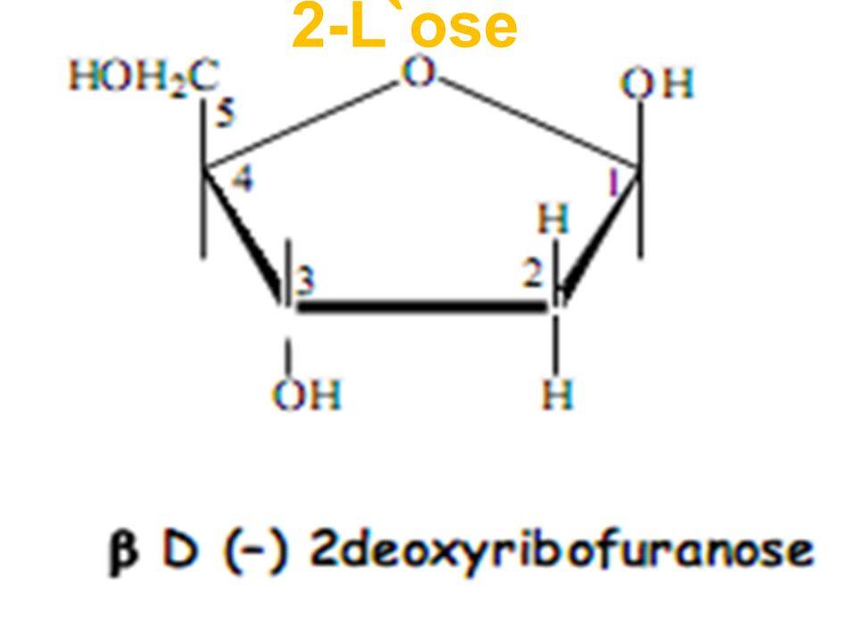 2-L`ose