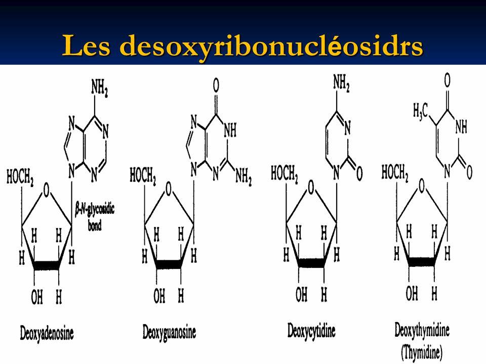 Les desoxyribonucléosidrs